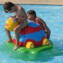 tortue piscine